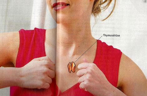 Thymusdrüse